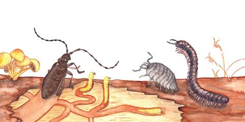 Bugs in a log