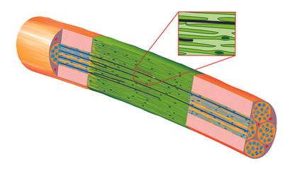 Engineered neural tissue