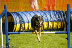 South Wales dog training club 3