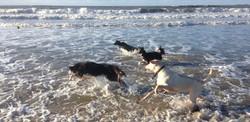 South Wales dog training club
