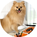 Our dog blog.png
