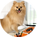 Dog blog.png