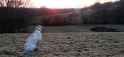South Wales dog training club 4