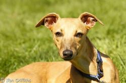 South Wales dog training club 2