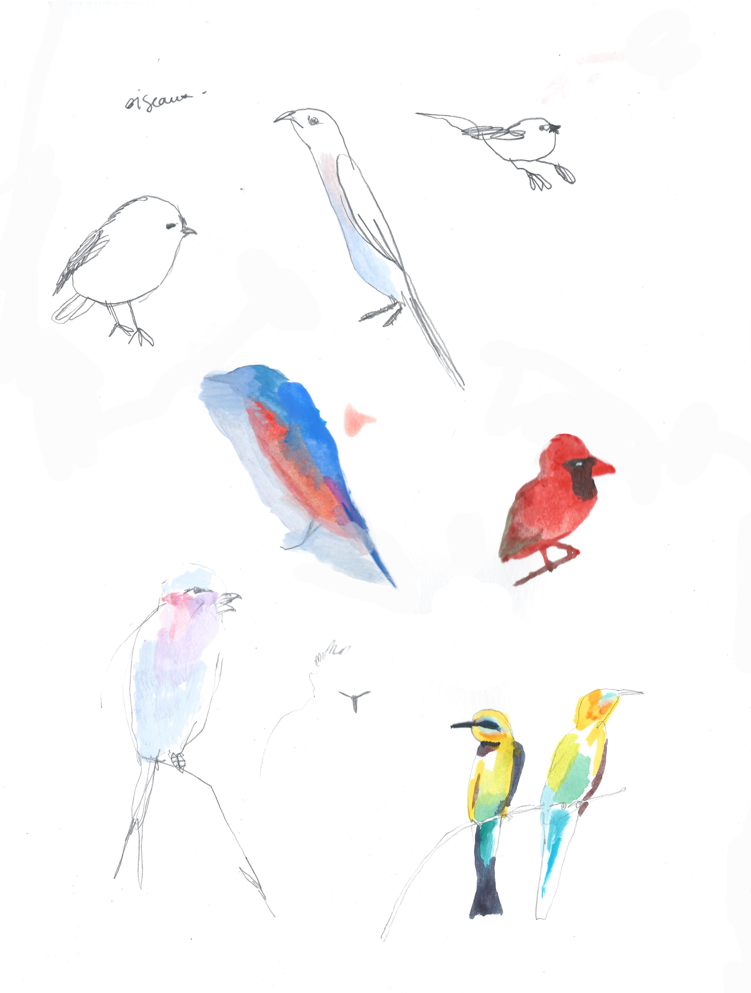 Essais Oiseaux