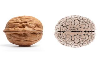 7 éléments nutritifs pour protéger votre cerveau contre le vieillissement