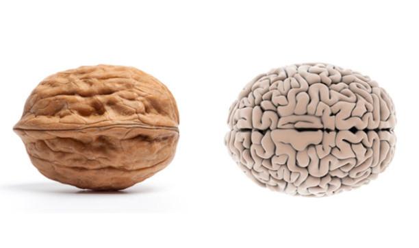 les-aliments-qui-protegent-le-cerveau-612x362.jpg
