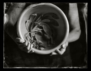 Offerings: Lamb's Ear