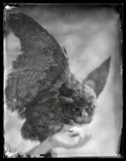 Offerings: Owl
