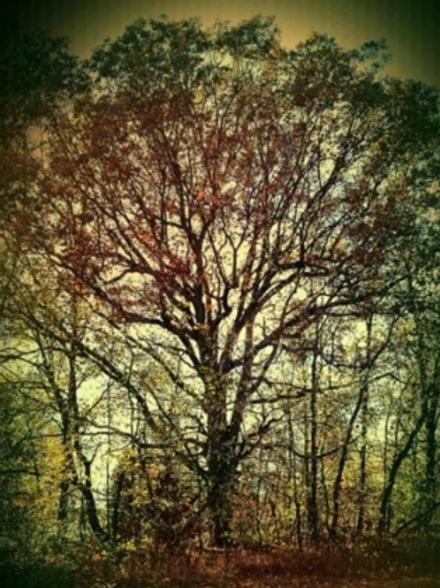 7 Day Voodoo Money Tree Spell