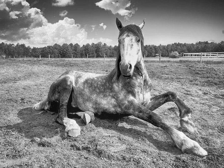 horse-2572051_1920_edited.jpg