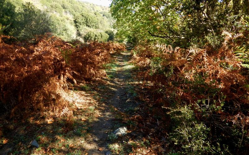 trail 1
