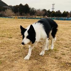 竹千代 (ドッグトレーニングパルコ)