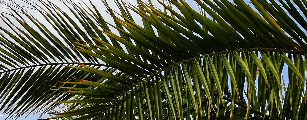 Palme2.jpg