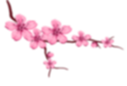 —Pngtree—cherry petals_3096077-2.png