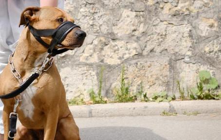 El mejor bozal para perro: ¿cómo elegirlo?