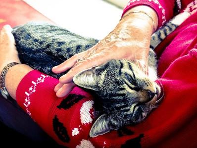 Los Mitos sobre los comportamientos de los gatos