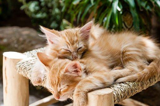 Cómo hago para tener dos gatos en casa