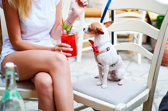 Amante de las mascotas con su perro