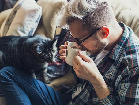 Cuidar a un gato: ¿qué hacer y qué no hacer?