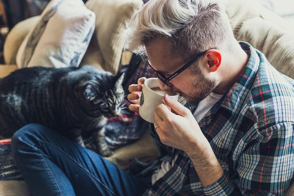 Qué hacer y que no al cuidar a un gato