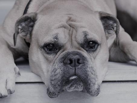 ¿Cuáles son los síntomas en las mascotas a los que más debes estar atento?