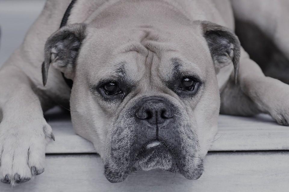 Sintomas de enfermedad en perros