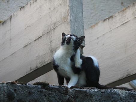 ¿Tienes un gato con pulgas? ¡Aquí la solución!