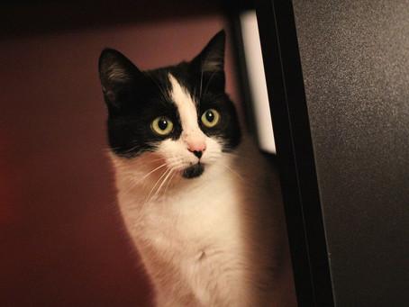 ¿Cómo puedo dejar a mi gato solo en casa sin que sufra?