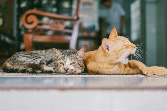 Servicios para mascotas a domicilio