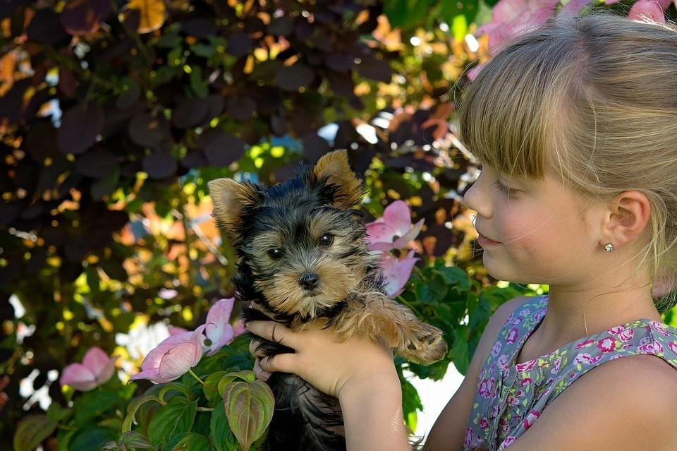 Enfermedades en razas de perro pequeñas