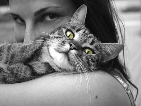 Conoce la razón de los comportamientos extraños de tu gato