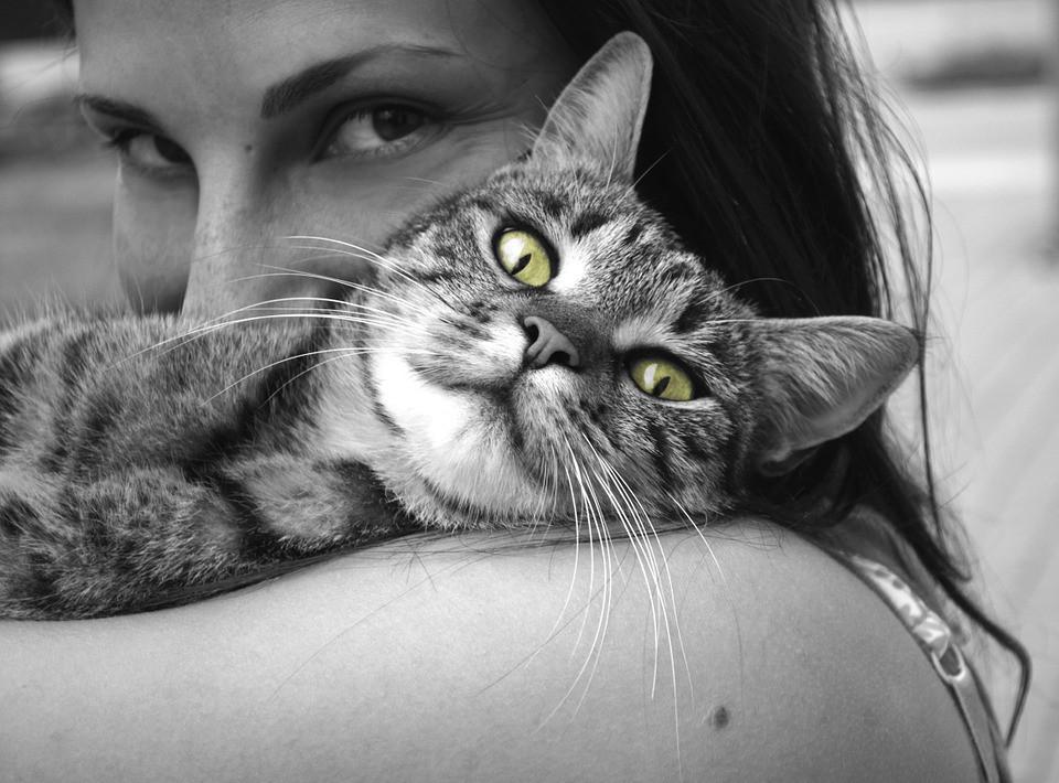 por qué tu gato actúa extraño en las noches