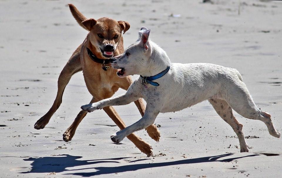 Qué hacer ante el ataque de un perro