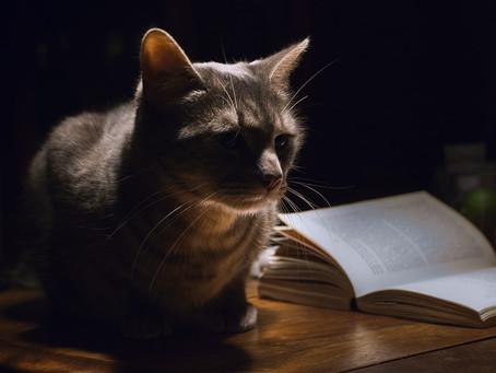 ¿Sabes qué hace tu gato durante la noche?
