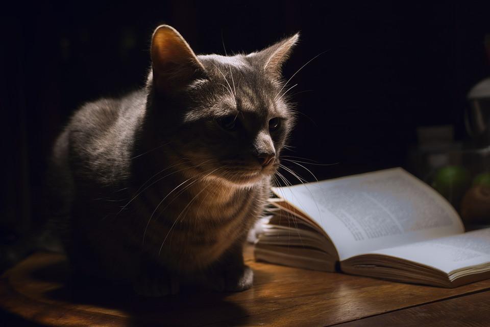 Qué hace mi gato de noche