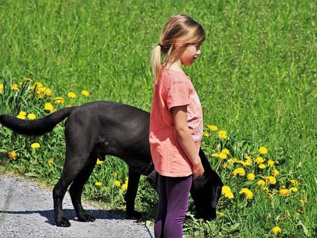 ¿Tu perro vomita después de comer? ¡Te lo explicamos todo!