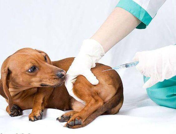 Enfermedades que puede transmitirte tu perro