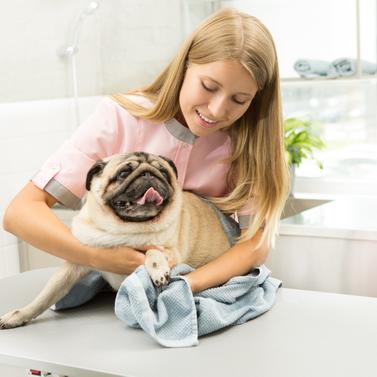 Insuficiencia cardíaca en perros ¿Cómo detectarla?