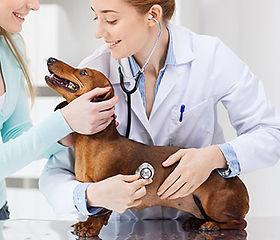 todo lo que debes saber sobre la salud de tu perro