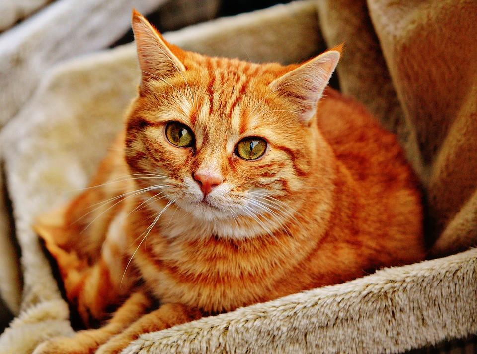 Cuáles son los mejores nombres para gatos