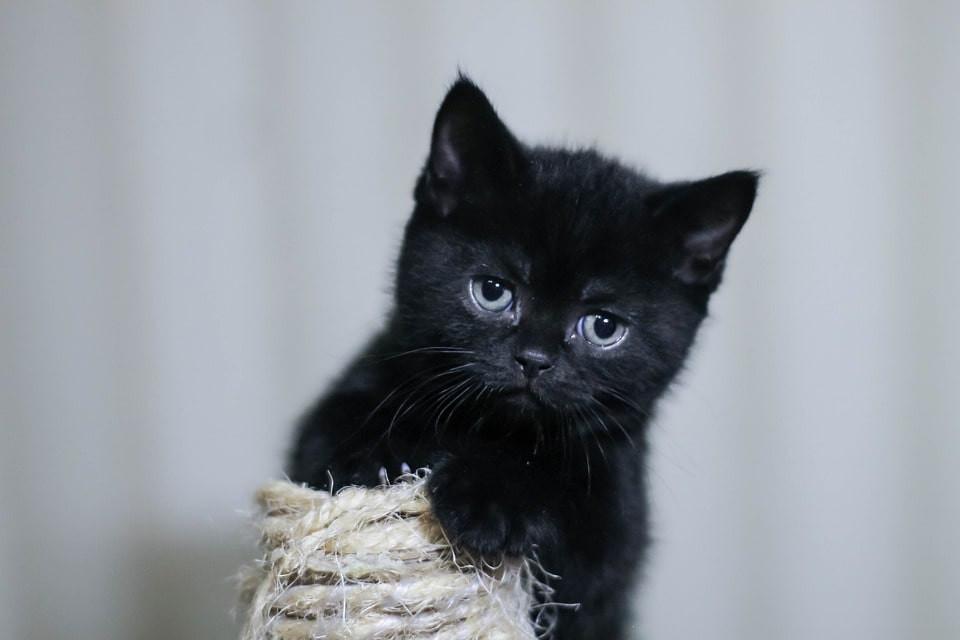 Cómo cuidar bien a un gato