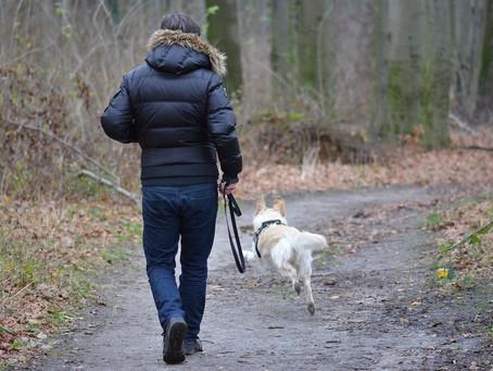 Técnicas para liberar el estrés en los perros
