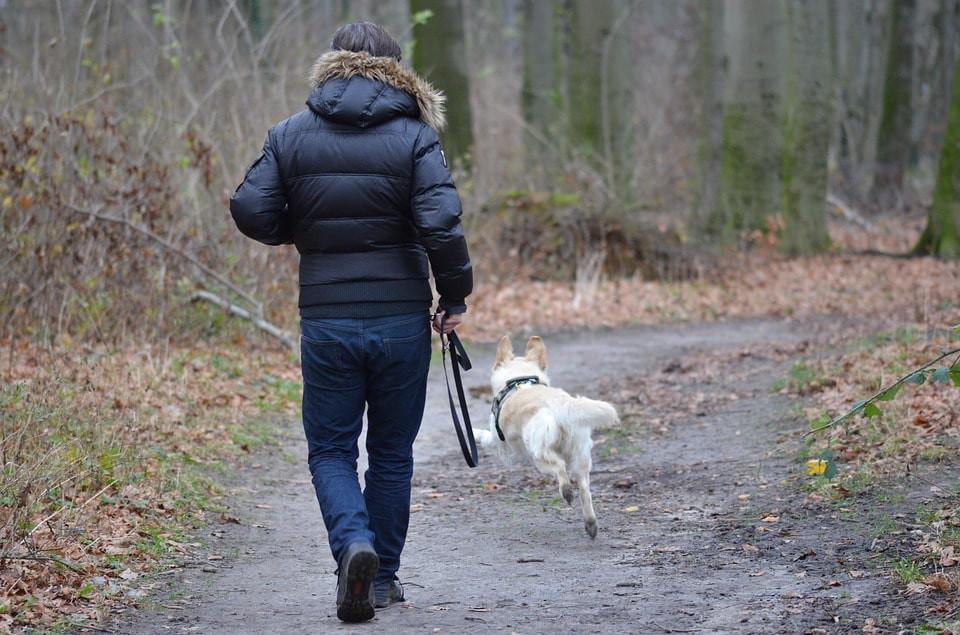 Cómo liberar estrés en tu perro