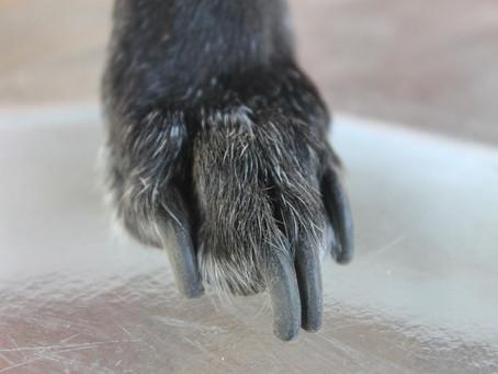 Forma correcta de cortar las uñas a un perro (sin lastimarlo)