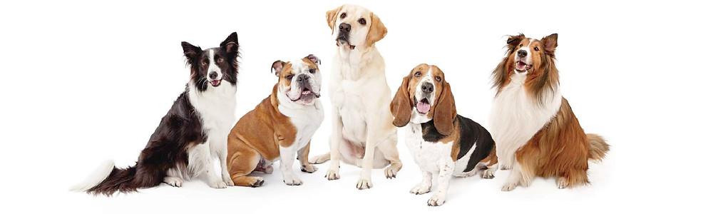 cual es el promedio de vida de un perro según su raza