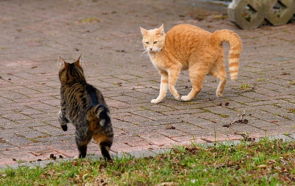 Agresividad en gatos