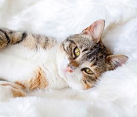 conoce todo sobre la nutricion de tu gato