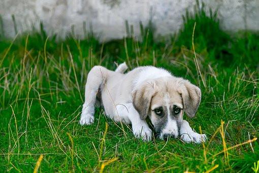 Enfermedades que puede sufrir tu perro sin vacunas