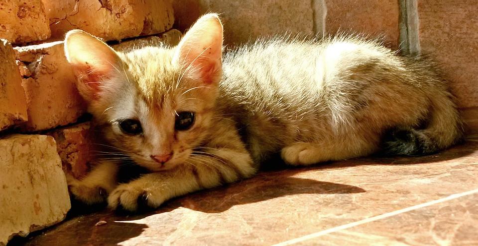 Por qué el sol beneficia a tu gato